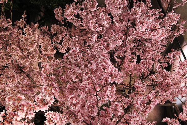 Sakura Nextdoor