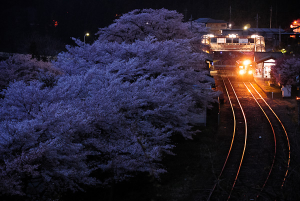 Cherry Blossom At Mizunuma Station