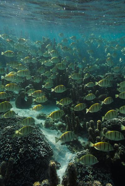 Full Of Fish