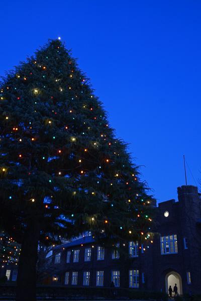 Xmas Tree At Rikkio