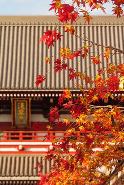 Autumn Colors At Sensouji