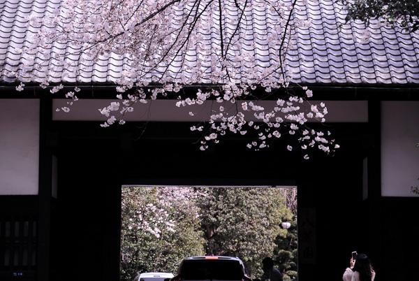Sakura2014